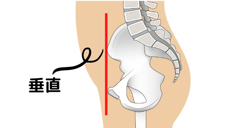 股関節の正しい位置の説明 側面