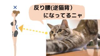 反り腰(逆猫背)になってる人を発見した猫